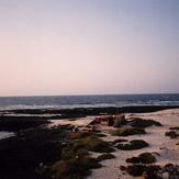 Majanicho