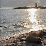 Carola beach