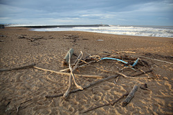 Drift Wood, Anglet - La Barre photo