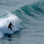 Seal surfing, Fletchers Beach