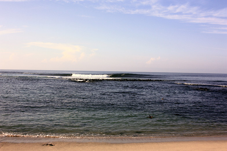 Galapagos surf, Loberia