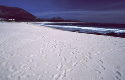 Playa de Larino photo