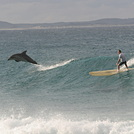 Crescent Head Surf
