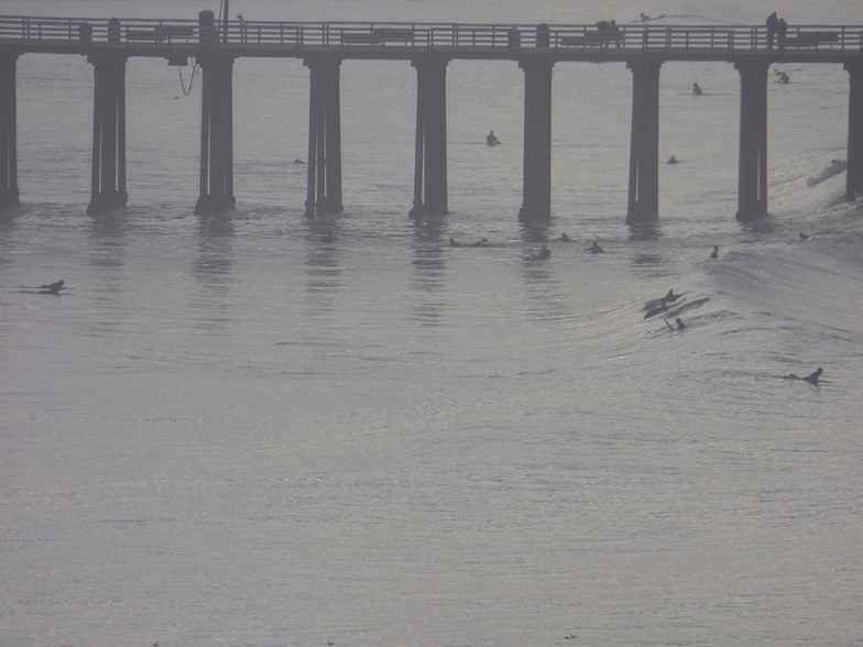 Dolphins by the Pismo Pier Jan 11 2015, Pismo Beach Pier