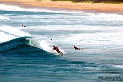 Woonona Surfer photo