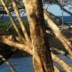 Exotic, Playa Negra