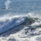 Whale racing at Middle Peak, Steamer Lane-Middle Peak