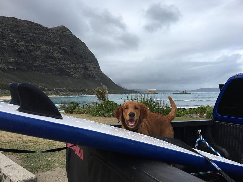 Waimanalo surf photo by ashley valera 2 09 pm 23 jan 2017 for Waimanalo feed