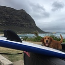 Good day for beginner surfing, Waimanalo