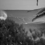 Bushcare, Shark Island (Cronulla)