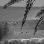 Tropical Breaks, Shark Island (Cronulla)