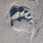Cherry Hill sand