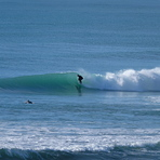 Glassy Pines Surf, Wainui Beach - Pines