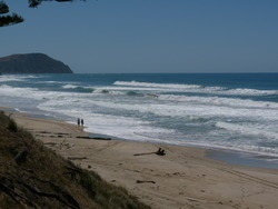 Pines - looking towards Makorori, Wainui Beach - Pines photo