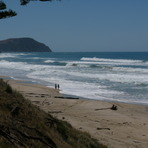 Pines - looking towards Makorori, Wainui Beach - Pines
