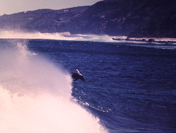 dolphins surfing at moses, Moses Rock photo