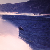 dolphins surfing at moses, Moses Rock