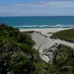 Nikau Palms and small waves, Fergusons Beach