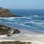 Otago Peninsula - Sandfly Bay