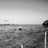 Te Oka, Banks Peninsula - Te Oka Bay