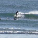 winter session of little nobby, Crescent Head