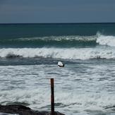 Boat Ramp Reef - NE1.5M Swell Westerly wind, Waimarama