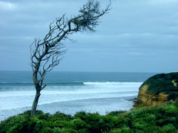 Bells Beach, Bells Beach - Rincon photo