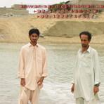 anwar sajid pishukan /anwar-sajidi@hotmail.com/+92-3222747517