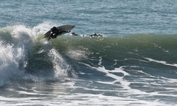 nice turn, Raglan-Whale Bay photo
