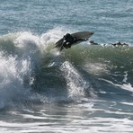 nice turn, Raglan-Whale Bay