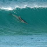 dolphin surfing waitpinga beach