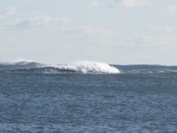 Feb 2012, Beadnell Bay photo