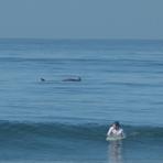 Acapulco Revolcadero Dolphins surf, Playa Princess