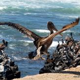 Pelican Bay, Scorpion Bay (San Juanico)