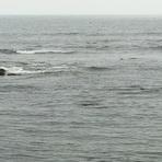 Zona Surf Algarrobo