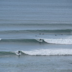 Bird Rocks little brother - summer swell, Sparras