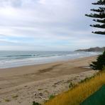 Empty Pines, Wainui Beach - Pines