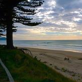 Pines, Wainui Beach - Pines