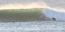 Moffats winter swell, Dickys photo