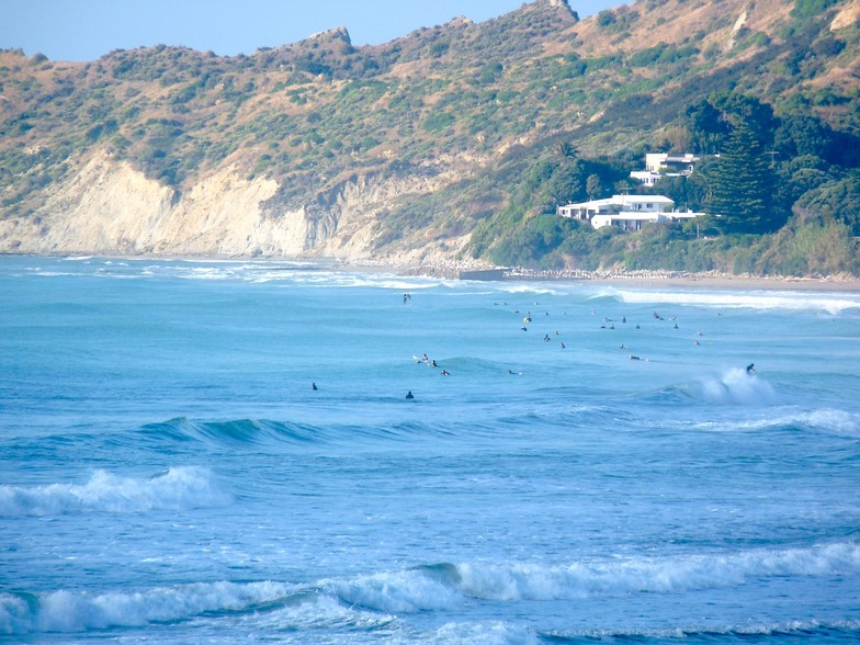 Crowded Stockroute, Wainui Beach - Stockroute