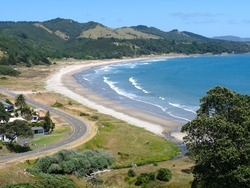 Dribbly shorey, Waihau Bay photo