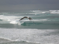 Empty left + bonus seagull, Nobbys Reef photo