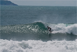 Mariscal Glassy  photo