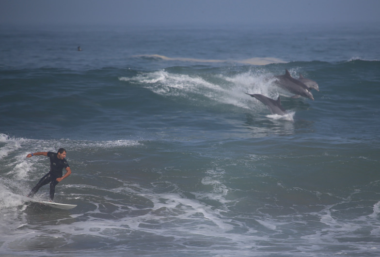 Surfing with dolphins, Puerto Viejo
