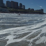 Derecha Playa Grande Mar del Plata Argentina, Biologia