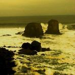 welcome to the freedom punta de lobos