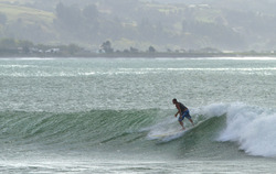 Willie at the Reef, Napier - The Reef photo