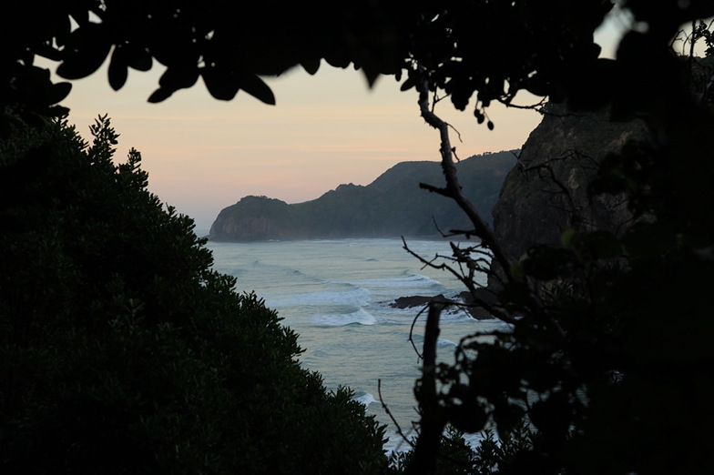 Piha from bush, Piha-The Ditch