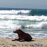 Left Break at Dog Beach/Huntington Cliffs w/dog