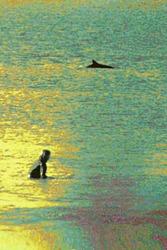 Ocean Buds, Trestles photo